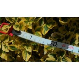 Vložka do pásma BMI plast 50m, odsazení B.
